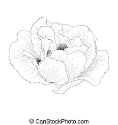 beautiful monochrome black and white Plant Paeonia arborea...