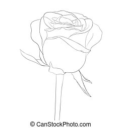 beautiful monochrome, black and white rose bud with stem. flower isolated.