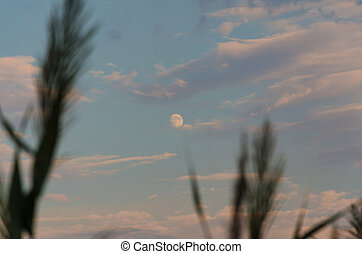 Beautiful moon in the evening sky sunset