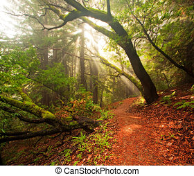 Beautiful morning in lush forest