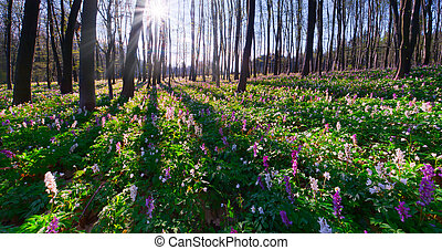 Beautiful morning landscape in the spring forest