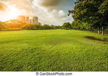 beautiful morning light in public park with grass field and green environment use as background, backdrop