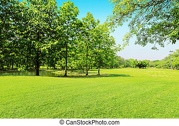 beautiful morning light in public park with green grass field