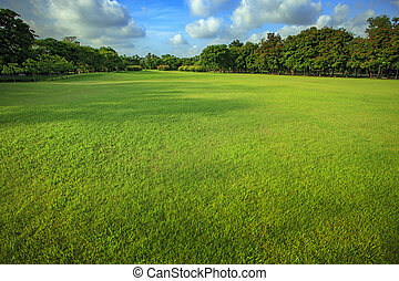 beautiful morning light of green grass lawn in public park
