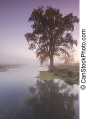 Beautiful morning mist landscape near a small river.