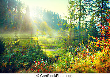 Beautiful morning misty old forest and meadow in countryside. Autumn nature scene