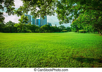 beautiful morning sun shining light in public park