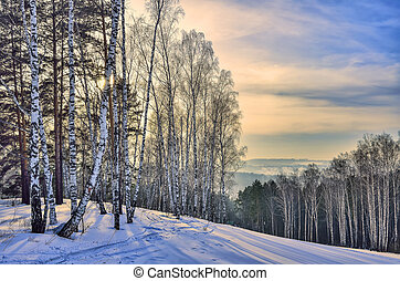 Beautiful morning winter landscape in mountain birch and pine forest