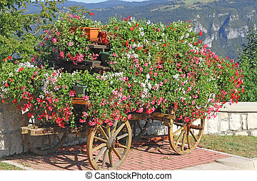 beautiful mountain flower cart with many Geraniums and other flowers to beautify the city