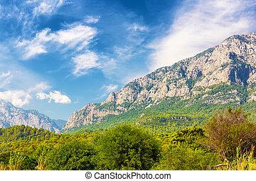Beautiful mountain forest landscape