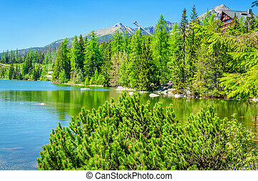 Beautiful mountain lake with dwarf pine
