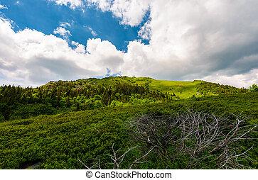 beautiful mountain landscape in summertime. dramatic scenery...