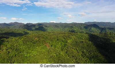 Beautiful mountain landscape with a jungle in sunny weather.