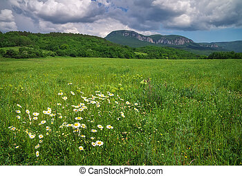 Beautiful mountain landscape with chamomiles and cloudy sky. Field in Crimea.