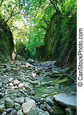 Beautiful mountain ravine with a creek in southern forest