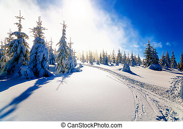 Beautiful mountain snowy landscape and traces of skiers.