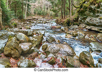 beautiful mountain stream in the woods