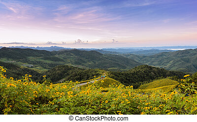 Beautiful mountain sunrise landscape with mexican sunflower blooming in Meahongson, Thailand.