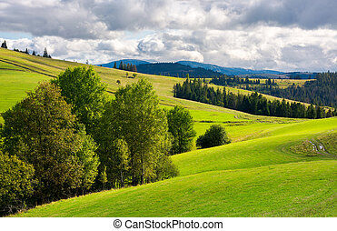 grassy rolling hills with trees - beautiful mountainous...