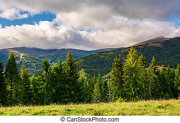 forest on a grassy meadow - beautiful mountainous scenery in...