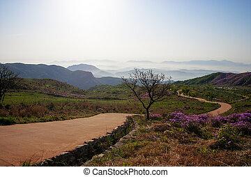 Beautiful mountains in south korea, hwangmaesan, Azaleas