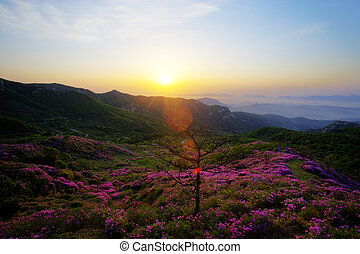 Beautiful mountains in south korea,hwangmaesan,Azaleas