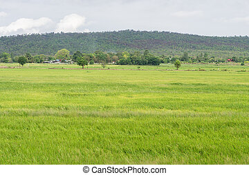 beautiful moutain landscape on countryside for background