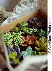 Beautiful multi-colored cactus succulents in a planter