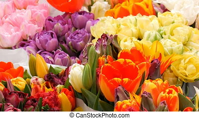 Beautiful multicolored variety of tulips in a large bouquet...