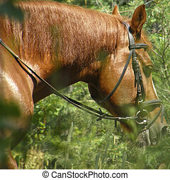 muzzle of a horse against a background of green leaves.