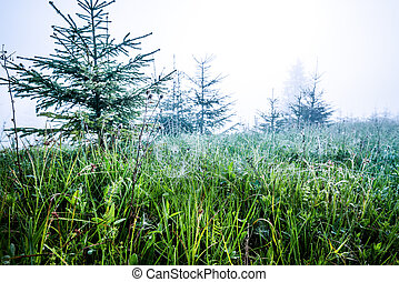 Beautiful natural view of small spruces covered in fog
