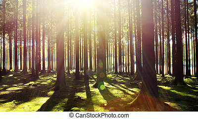 Bright sun in the forest .
