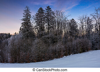 forest in hoarfrost on snowy hillside - beautiful nature...