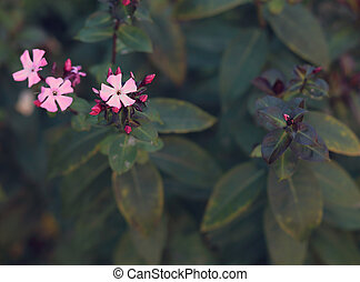 Beautiful nature background with tender pink flowers