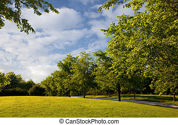 Beautiful nature in public park with green grass and trees on a summer day