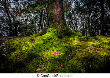 beautiful nature of big tree in good environmental forest