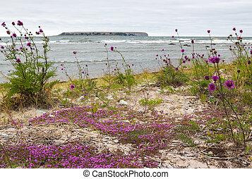 Beautiful nature of Gotland, Sweden