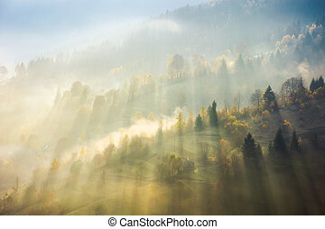 beautiful nature scene in fog. bursts of light come through...