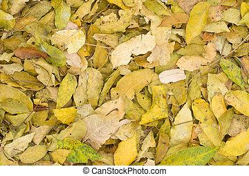 Beautiful neem leaf background in autumn season, nature...