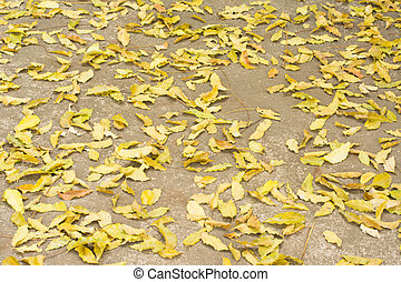 Beautiful neem leaf fall on cement background in autumn...