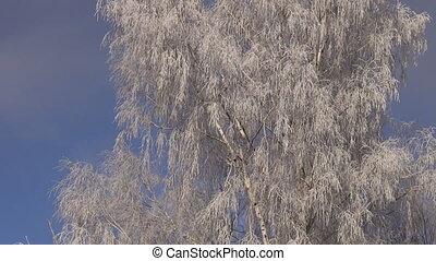 winter hoarfrost rime on birch tree