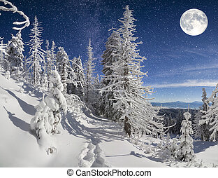 Beautiful night winter landscape in the mountain forest