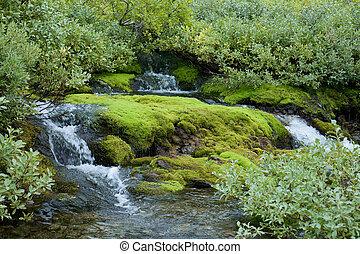 Beautiful northern damp wood in light green tones - ...