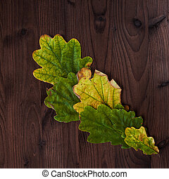 Beautiful oak leaves on wooden background