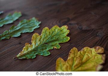 Beautiful oak leaves on wooden background. Side view