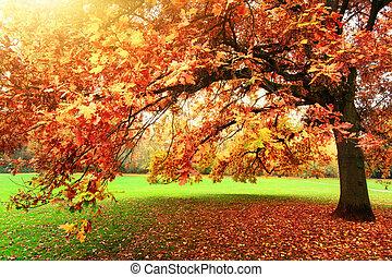 Beautiful oak tree in a park in autumn