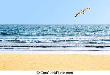 Beautiful ocean shore with waves and a seagull in the sky
