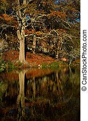 Beautiful old tree in autumn