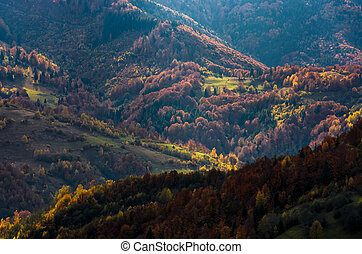 Beautiful orange and red autumn forest on hills - Beautiful...