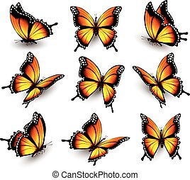 Beautiful orange butterfly in different positions. Vector.